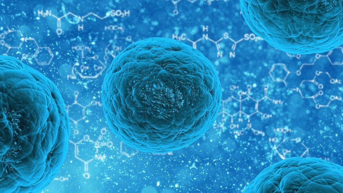 Bactéries et virus présents dans nos intestins