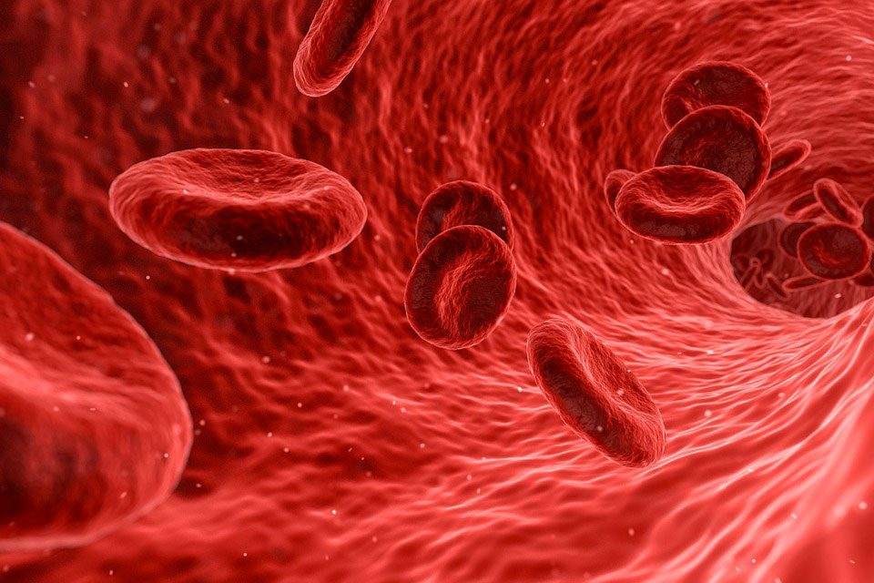 Vie microscopique du sang